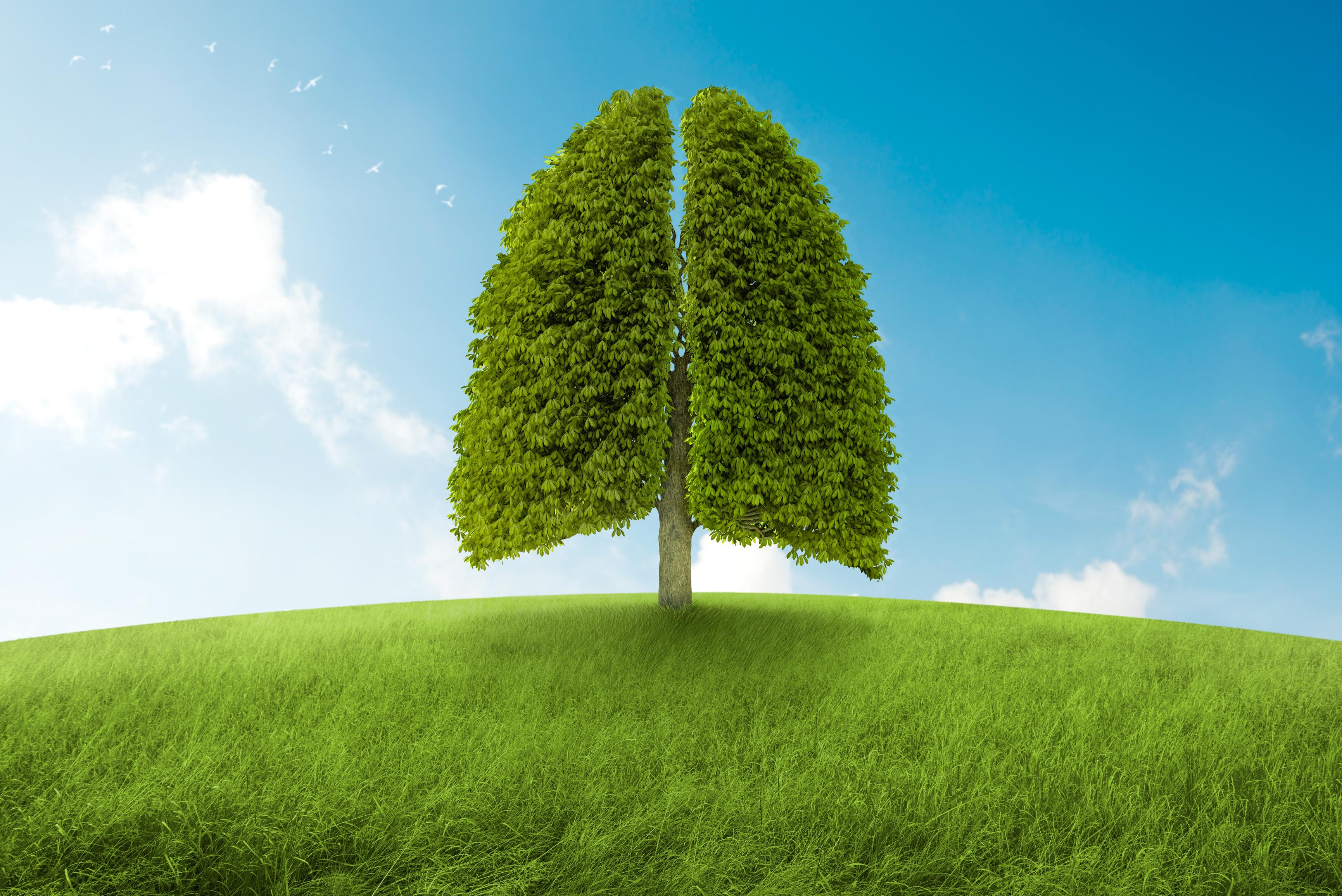 πνεύμονες δέντρο